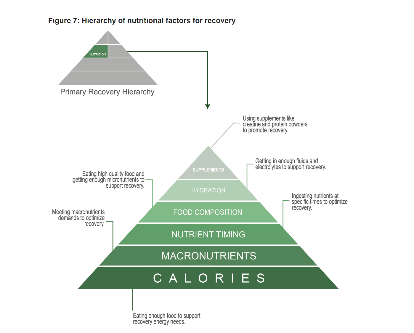 Hierarchy of Nutritional Factors of Recovery