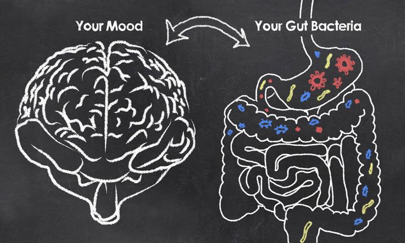 Brain -> Gut