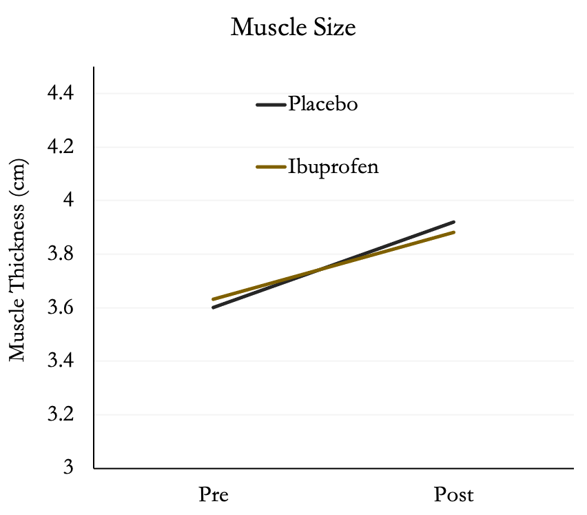 Graph showing Both groups increased muscle size by ~8%.